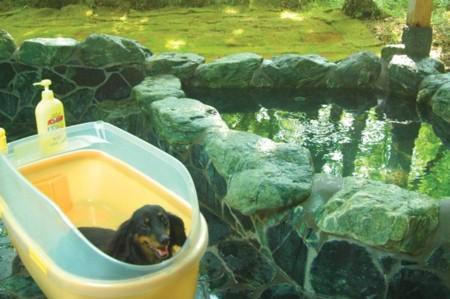 温泉露天風呂で、ペットと一緒に温泉浴