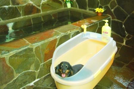 内風呂も専用バスタブペットと一緒に入浴可