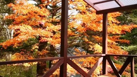 もみの木台B棟:デッキから見える紅葉