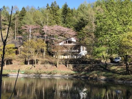 目の前は清々しい森の湖畔