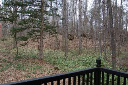 国有林の借景