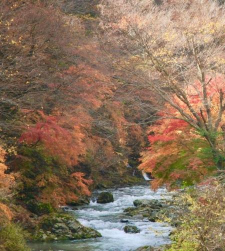 紅葉時期の道志川。絶景です!