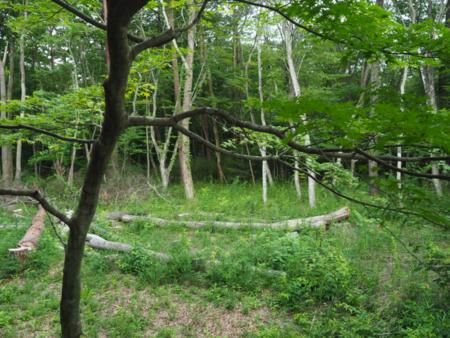 周りは木々に囲まれています。